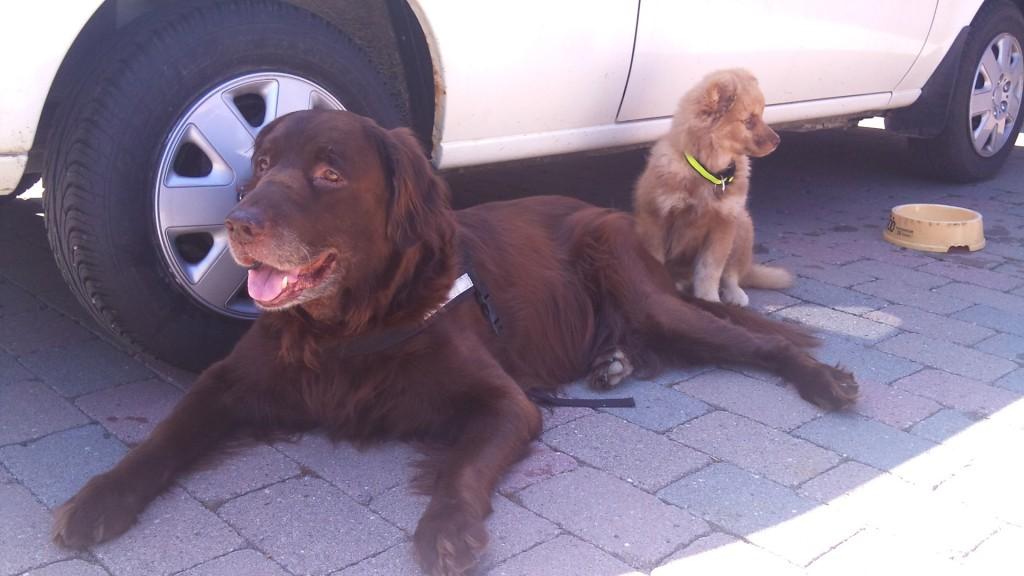 Rufus og Tara