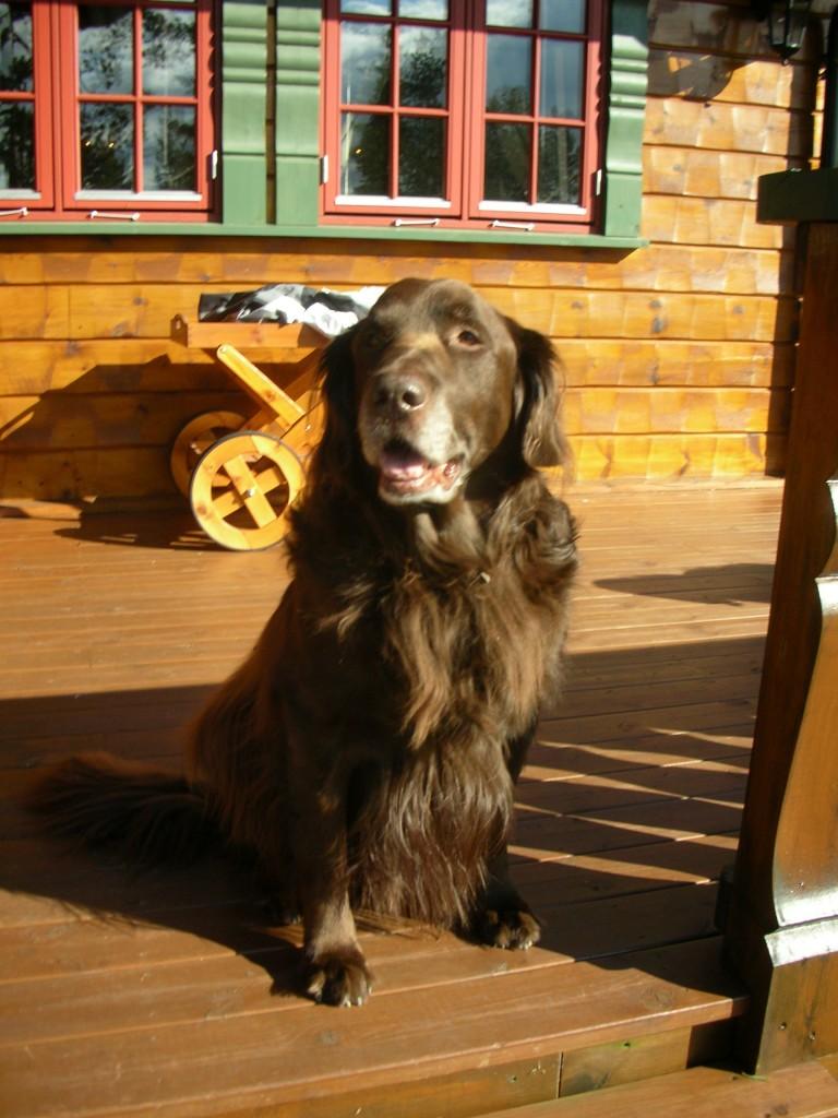 Rufus på hytta