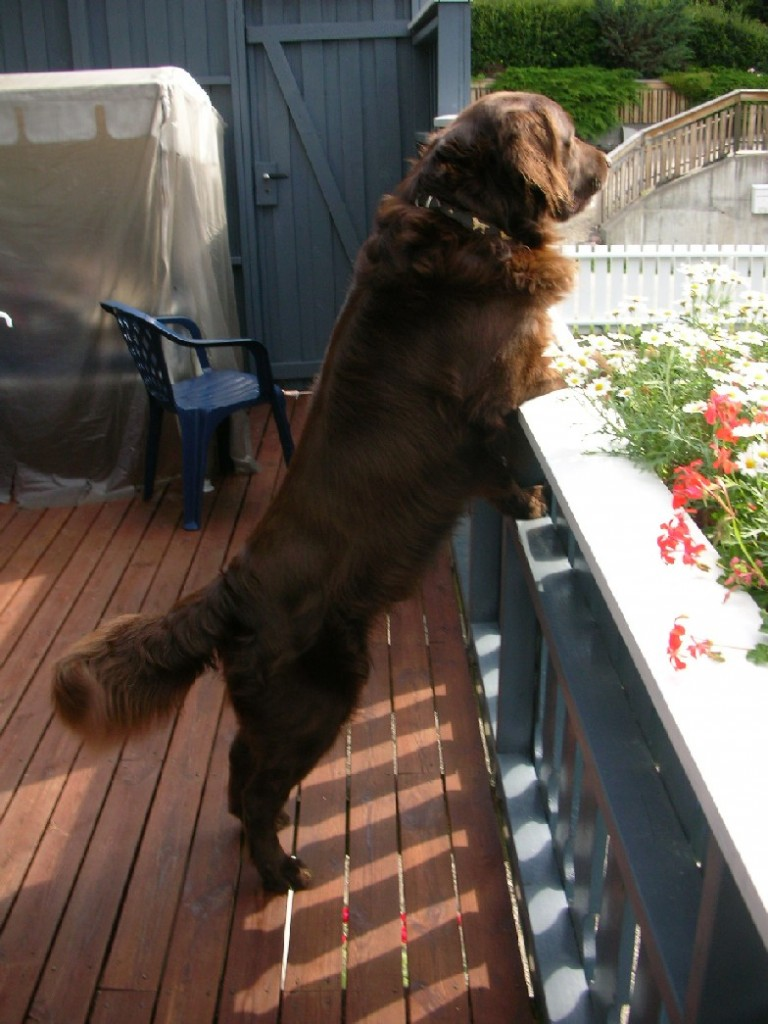 Rufus (2)