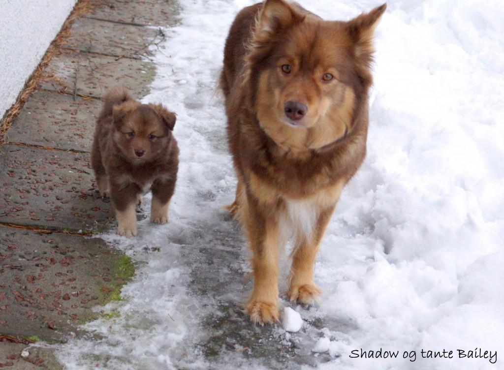 Shadow og tante bailey